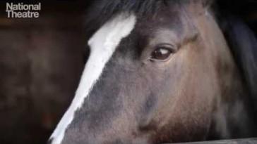 Horses in War
